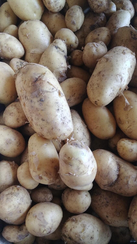 Pommes de terre (kg)