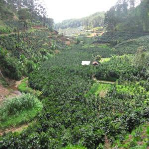 Vietnam - Lam Dong