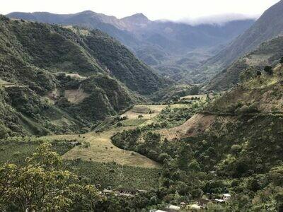 Colombia - El Botan Supremo (Green Beans)