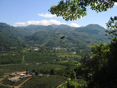 Costa Rica - Bromelia Fancy