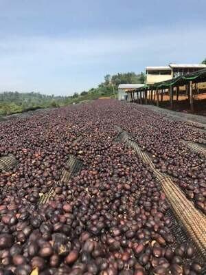 Rwanda - Kawa Coko