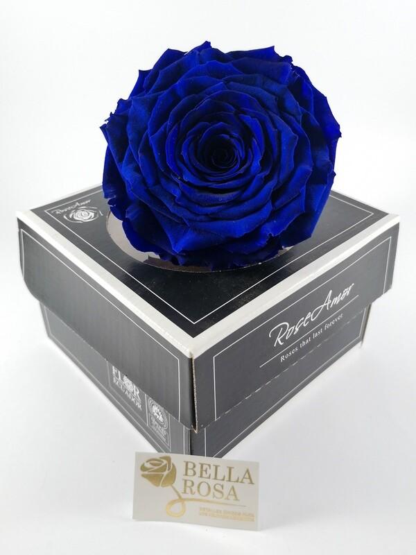 Rosa Preservada XXL Azul