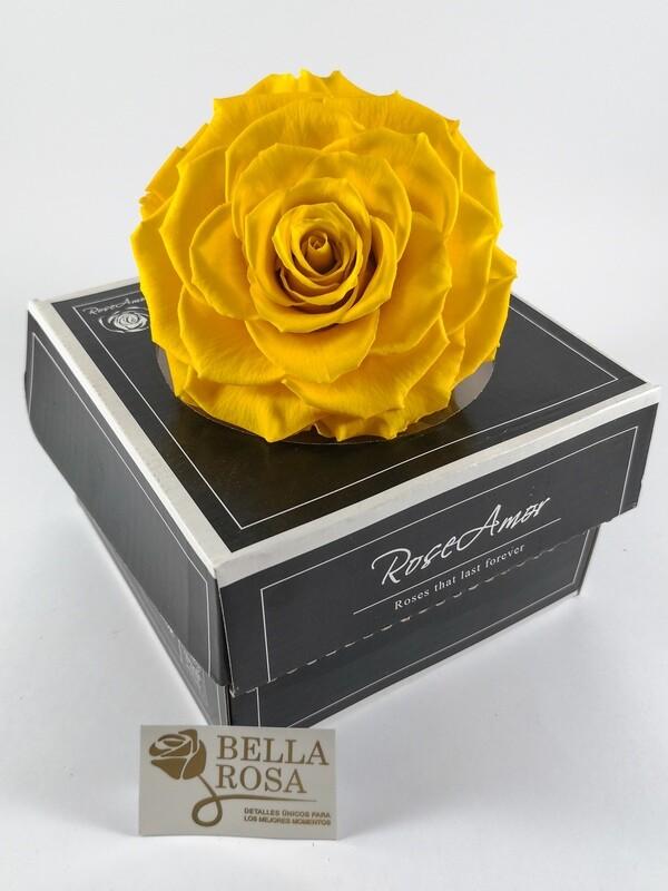 Rosa Preservada XXLB Amarilla