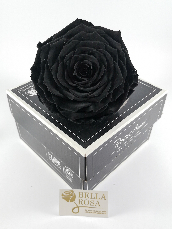 Rosa Preservada XXL Negra