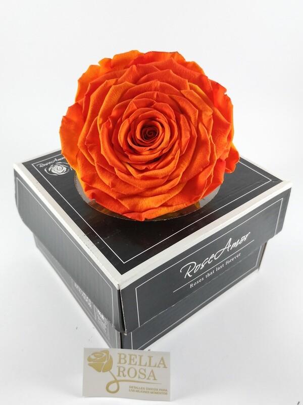 Rosa Preservada XXL BIC Anaranjada