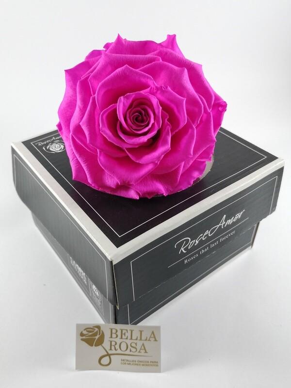 Rosa Preservada XXLB Rosada