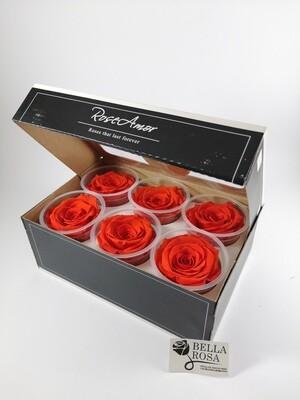 Caja de 6 Rosas Preservadas Anaranjadas