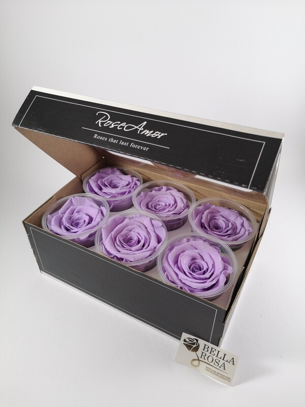 Caja de 6 Rosas Preservadas Violeta