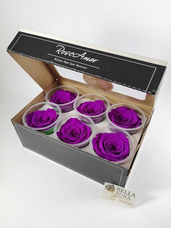 Caja de 6 Rosas Preservadas Moradas