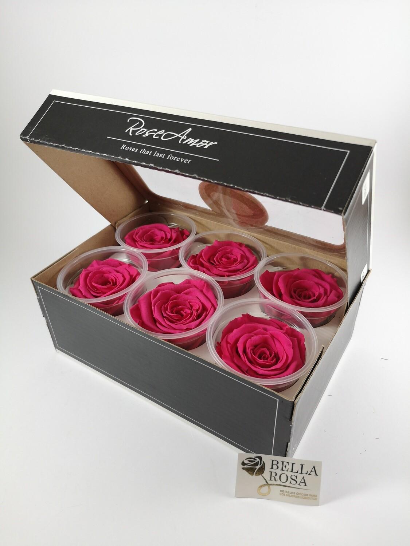 Caja de 6 Rosas Preservadas Rosadas