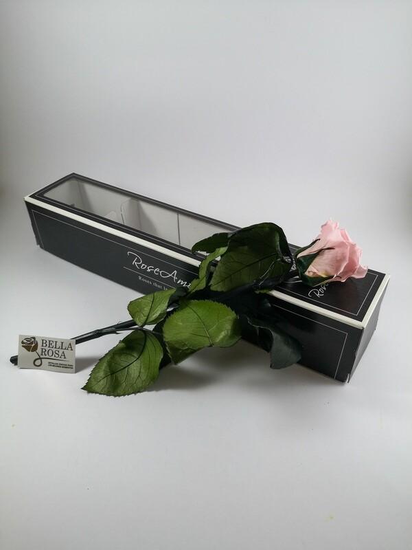 Rosa Rosada Con Tallo