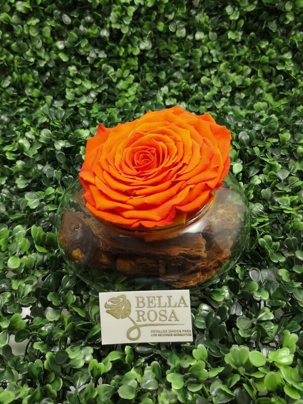 Rosa Preservada Anaranjada en Base de Vidrio