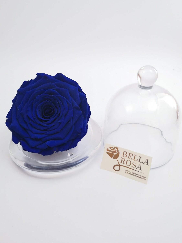 Rosa Azul preservada XXL con Cúpula