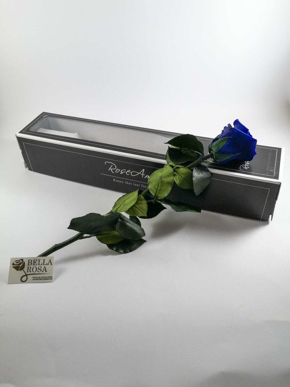 Rosa preservada Azul Con Tallo