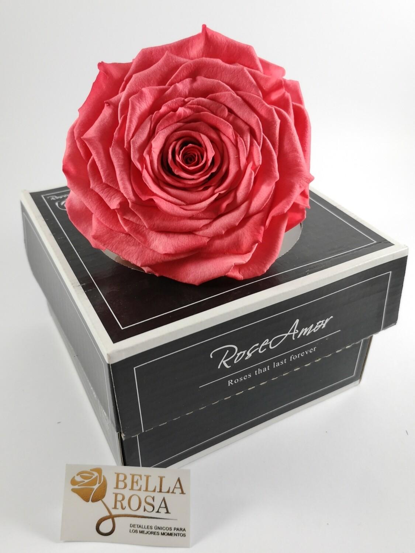 Rosa Preservada XXL Rosado Claro