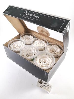 Caja con 6 rosas naturales preservadas