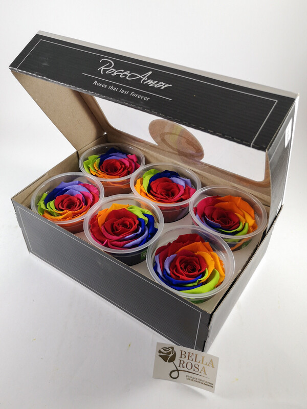 Caja de 6 rosas naturales preservadas XL