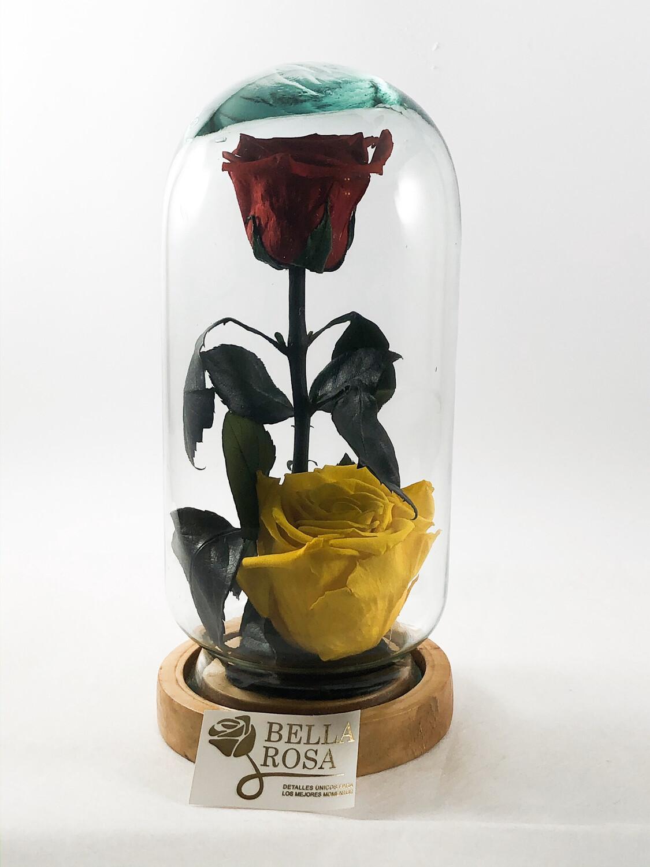 Cúpula de cristal, 22cm con 2 rosas preservadas.