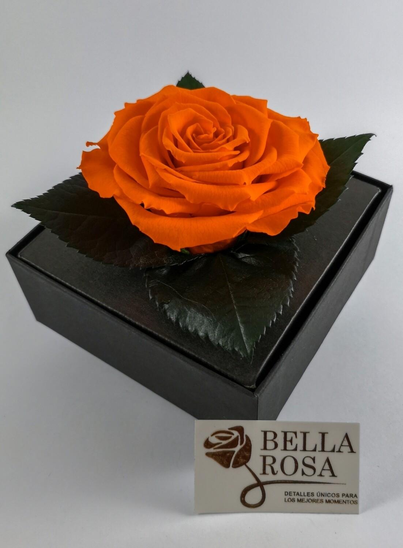 Rosa Preservada Anaranjada Caja Acrílica