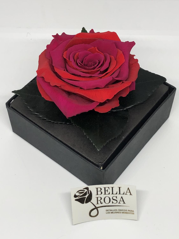 Caja acrílica con rosa bicolor