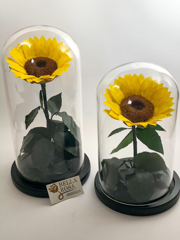 Cúpulas con girasol preservado de 25. cm de alto
