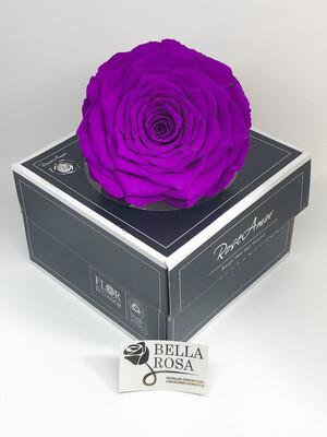 Rosa natural preservada XXl