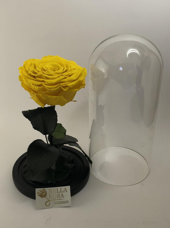 Cúpula de cristal de 25 cm de alto, con rosa natural preservada