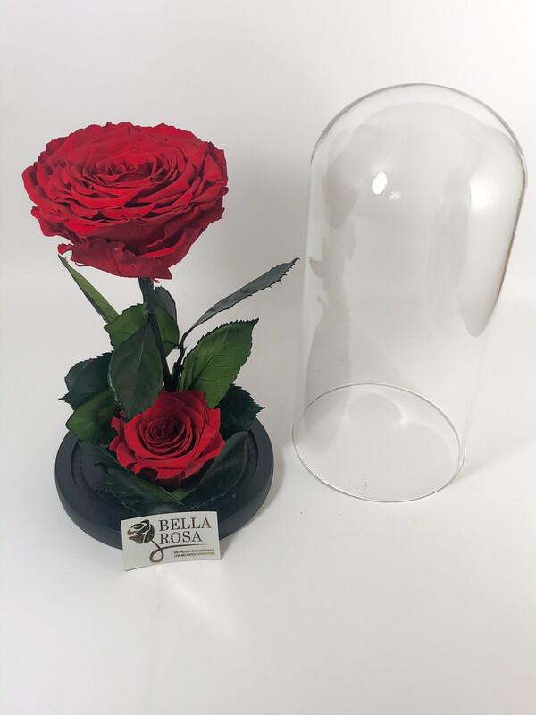 Cúpula de cristal con 2 rosas preservadas