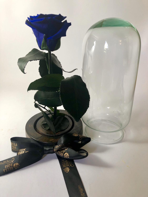 Cúpula de vidrio, 22 cm de alto, con rosa natural preservada