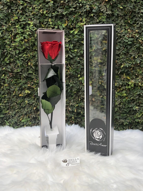 Rosa natural preservada de 30 cm de alto