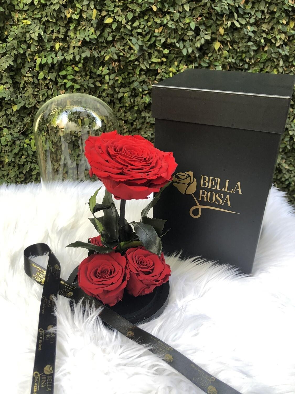 Cúpula de cristal de 25 cm de alto con una rosa XXl y 3 rosas Xl. Diferentes colores disponibles