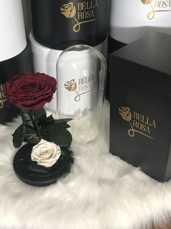 Cúpula de cristal de 25 cm de alto con una rosa XXl y una Xl , diferentes colores disponibles