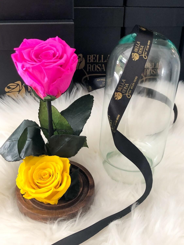 Cúpula de cristal de 22 cm de alto con 2 rosas preservadas XL