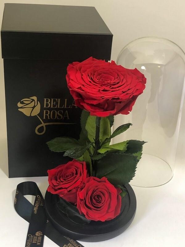 Cúpula de cristal de de 25 cm de alto, con 3 rosas naturales preservadas