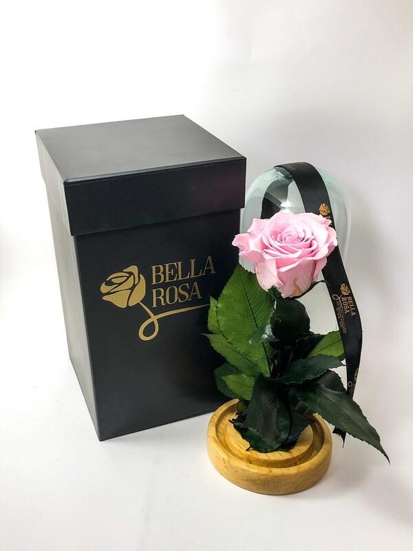 Cúpula de cristal de 22 cm de alto con rosa natural preservada