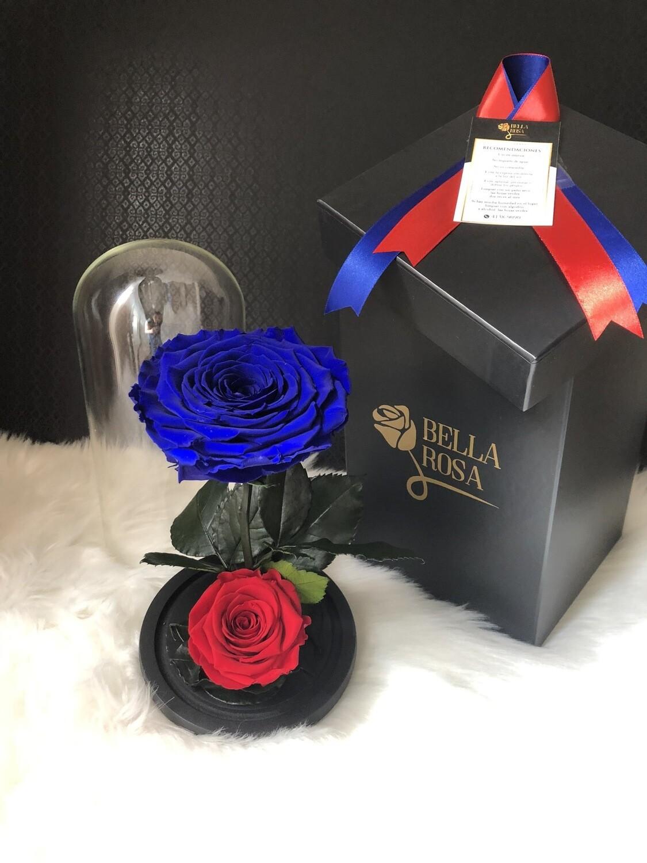 Cúpula de cristal de de 25 cm de alto con 2 rosas preservadas
