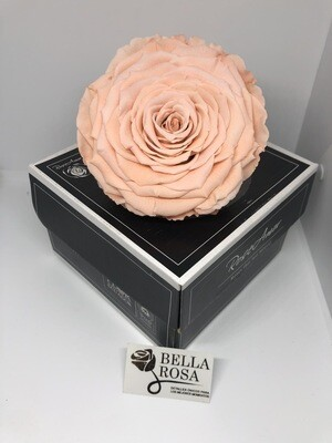 Rosa tamaño XXl
