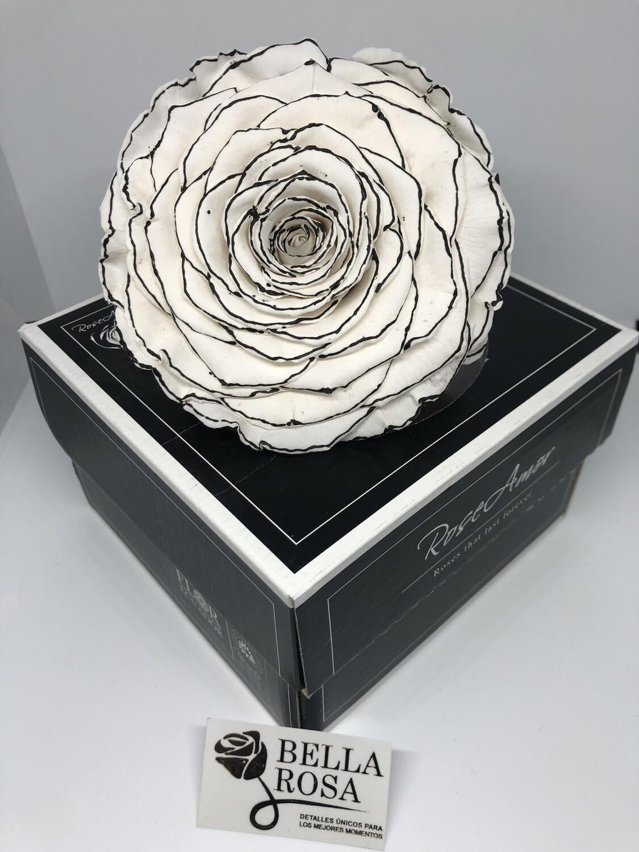 Rosa natural preservada blanca con orilla negra