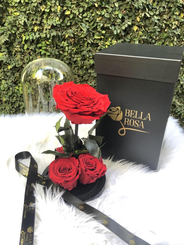 Cúpula de cristal de 25 cm de alto con 4 rosas preservadas