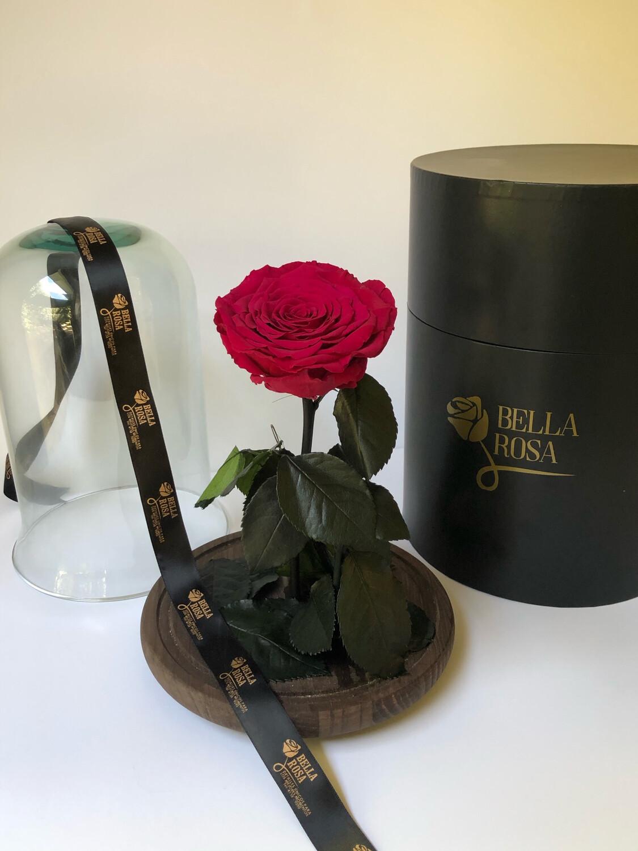 Cúpula de cristal premium
