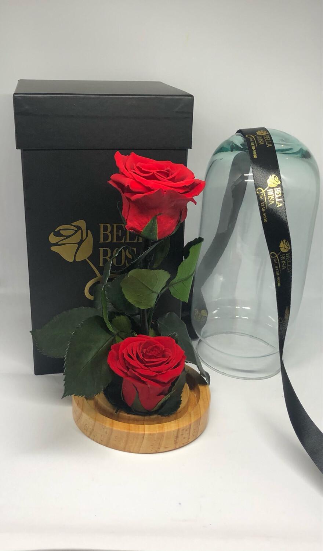 Cúpula de cristal, 22 cm con 2 rosas preservadas