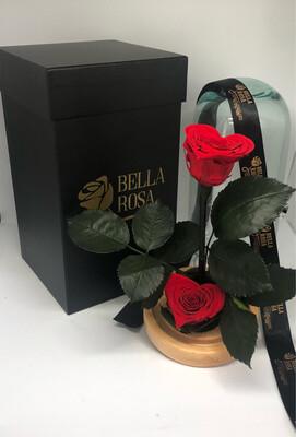 Cúpula de 22 cm con 2 rosas preservadas mini corazón