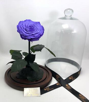 Cúpula de cristal de 33 cm de alto, rosa XXl