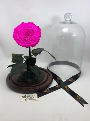 Cúpula de cristal 33 cm, rosa XXl