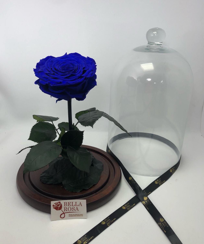 Cúpula de cristal de 33 cm de alto, Rosa XXl. Blu 03