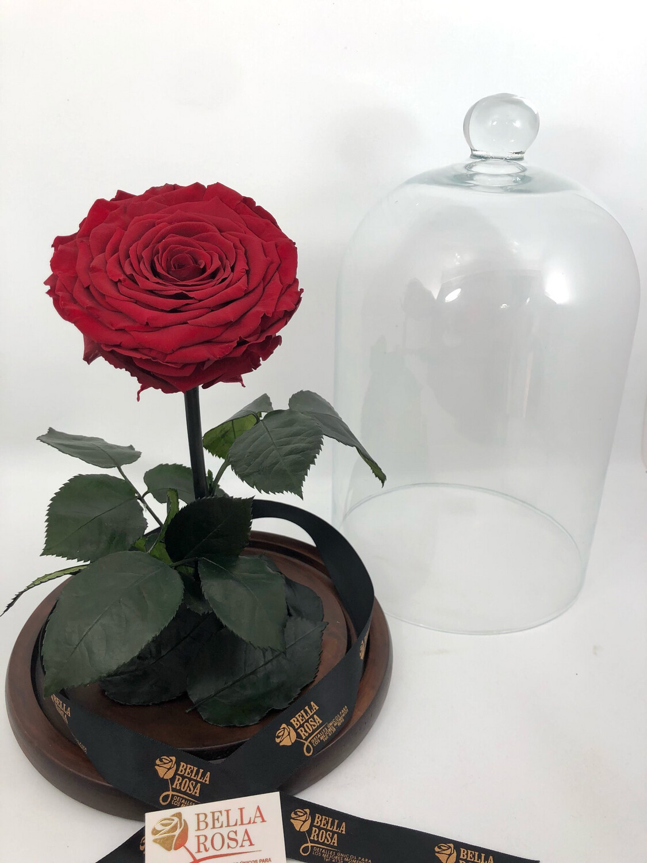 Cúpula de 33 cm de alto, rosa tamaño  XXl