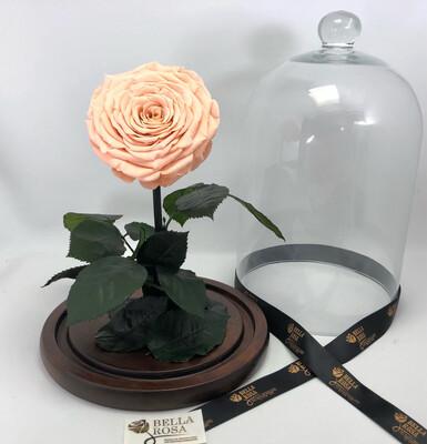 Cúpula de 33 cm, rosa XXl