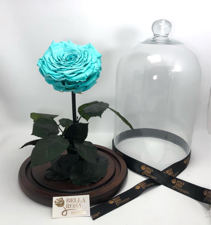 Cúpula de cristal de 33 cm, rosa XXl