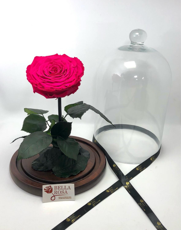 Cúpula de cristal de 33 cm de alto, Rosa XXl. Pin 05