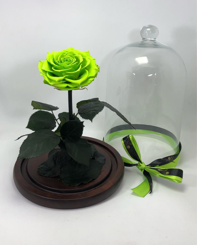 Cúpula de cristal de 33 cm de alto, Rosa XXl Gree 05